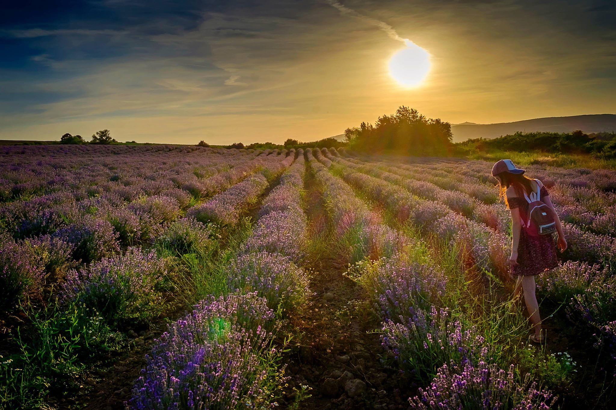 Люблю гулять по лавандовым полям :)